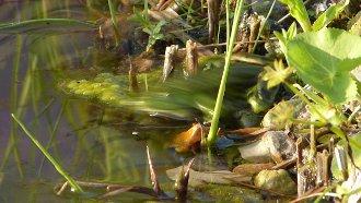 85,3 MB (01:10) Fliehender Frosch